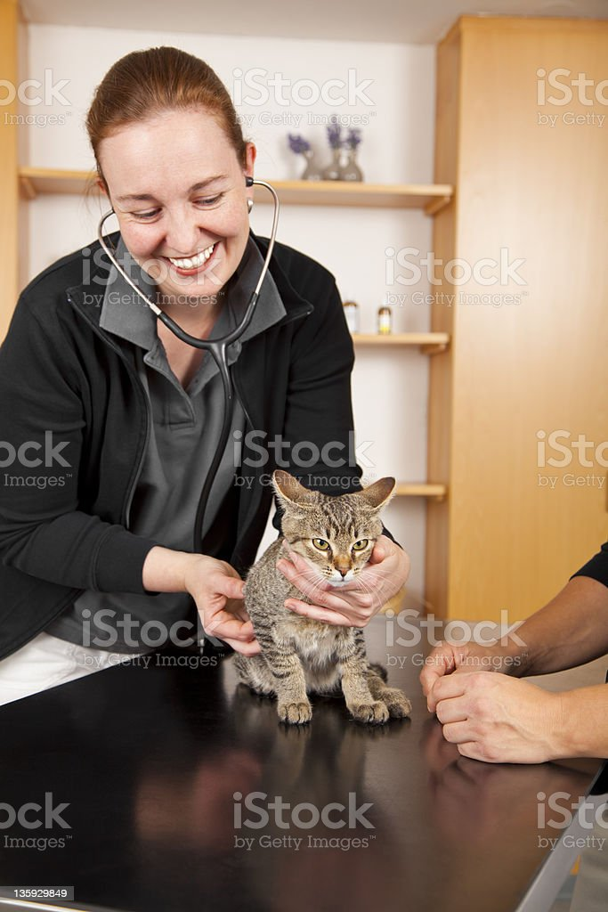 smiling veterinarian examining domestic cat royalty-free stock photo