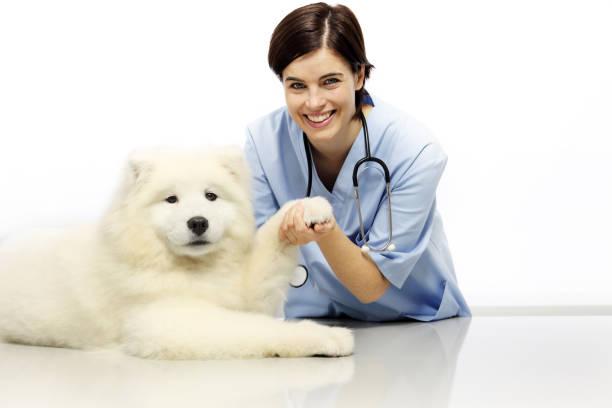 Smiling veterinarian examining pet dog on table in vet clinic picture id641666140?b=1&k=6&m=641666140&s=612x612&w=0&h=kopkz0ygq7mqdpkm ir2zx18 h6mdqydcroyoxo0y0q=