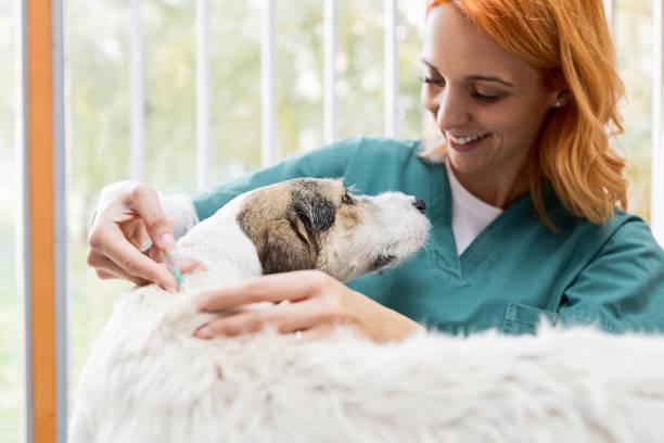 Lächelnder Tierarzt gibt einem Hund einen Impfstoff Schuss – Foto