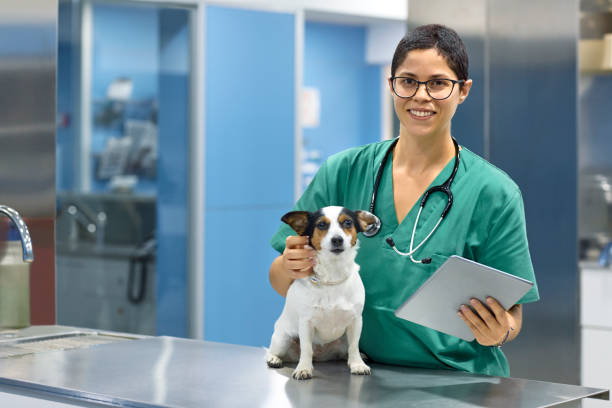 smiling veterinarian with dog and digital tablet - veterinarian stock photos and pictures
