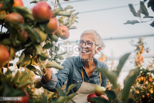 1056015258 istock photo Smiling woman at apple orchard 1056010762