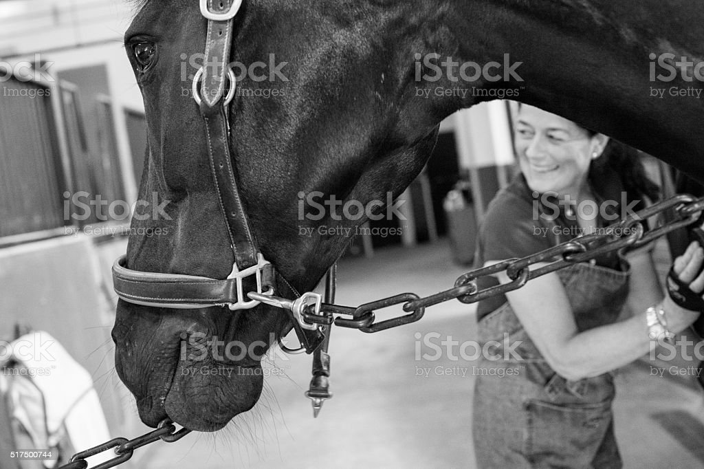 Smiling woman grooming black dressage horse stock photo