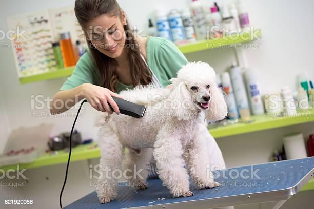 Smiling woman haircut white poodle picture id621920088?b=1&k=6&m=621920088&s=612x612&h= wtisdgskedjxhgycqkuyls2alewo7bnlpglcdfzm u=