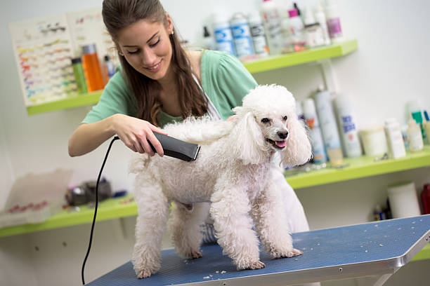 smiling woman haircut white poodle - 美容師 個照片及圖片檔
