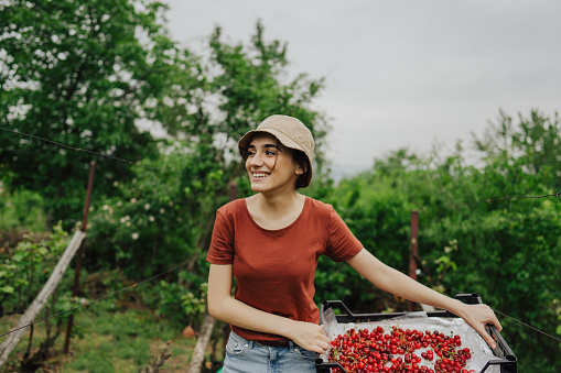 Smiling woman holding a basket full of organic cherries