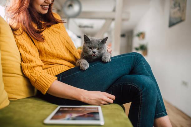 Smiling woman holding a cat picture id1128001382?b=1&k=6&m=1128001382&s=612x612&w=0&h=3mmigf05ga2zwnqiibduplzllbgk2dd ojcaatf7n1k=