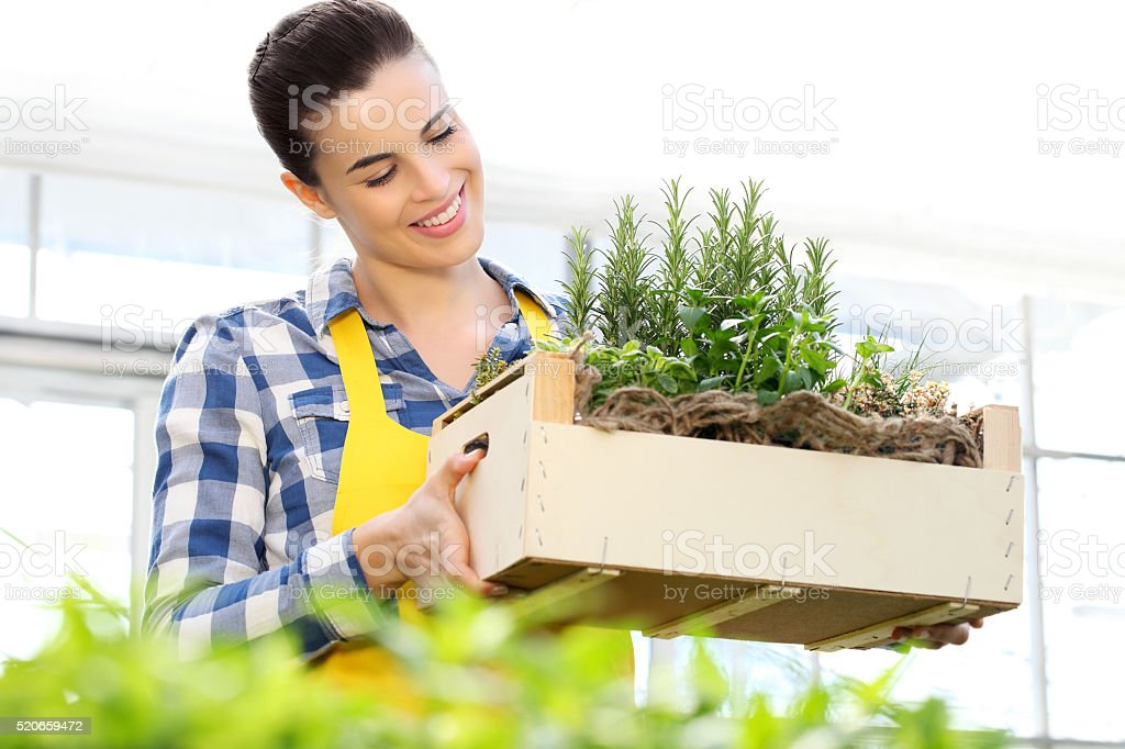 smiling woman holding a crate of aromatic herbs, working stock photo