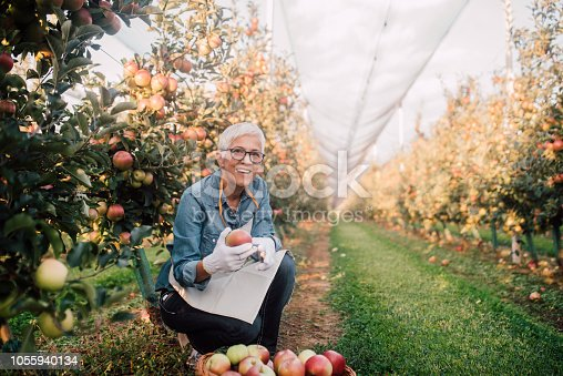 1056015258 istock photo Smiling woman holding an apple at plantation 1055940134