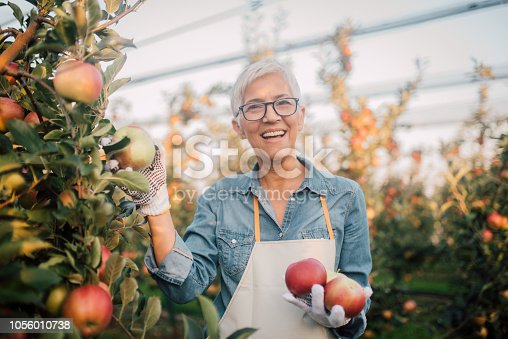 1056015258 istock photo Smiling woman holding apples 1056010738