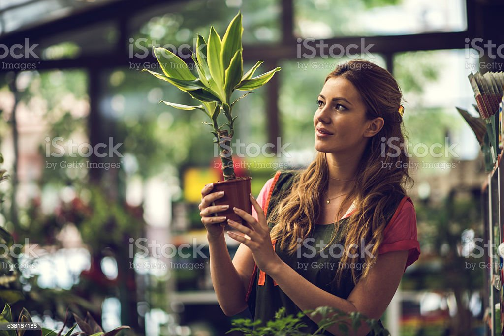Smiling woman looking at potted plant in a greenhouse. stock photo