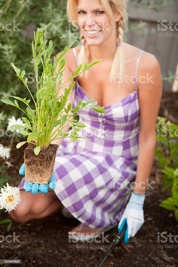 Smiling woman planting in the garden royalty-free stock photo