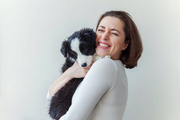 smiling young attractive woman embracing huging cute puppy dog border collie isolated on white background - pet owner stock pictures, royalty-free photos & images