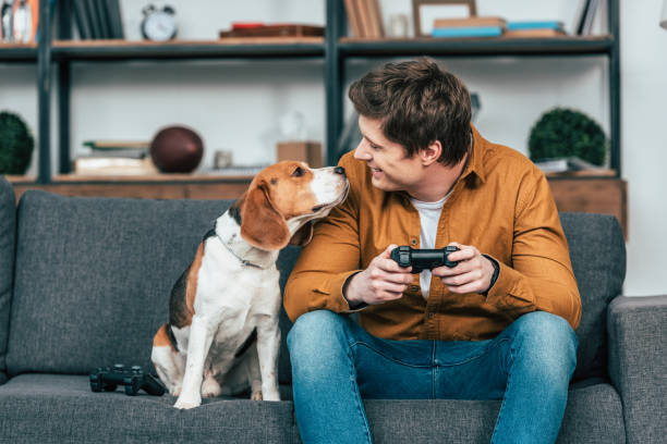 Smiling young man with gamepad sitting on sofa and looking at dog stock photo
