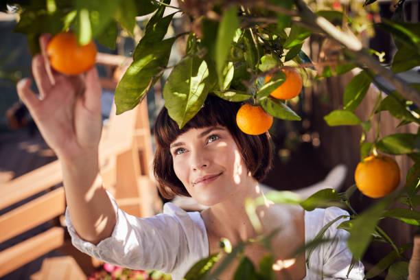 Lächelnde junge Frau pflücken Orangen von einem Baum – Foto