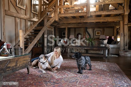 Relaxed Caucasian woman in early 20s lying on Persian rug in rustic family home with alert senior Boxer and English Cocker Spaniel.