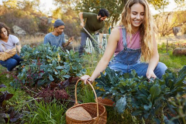Lächelnde junge Frau arbeitet mit Freunden im Gemüsegarten – Foto