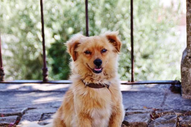Smilling dog stock photo
