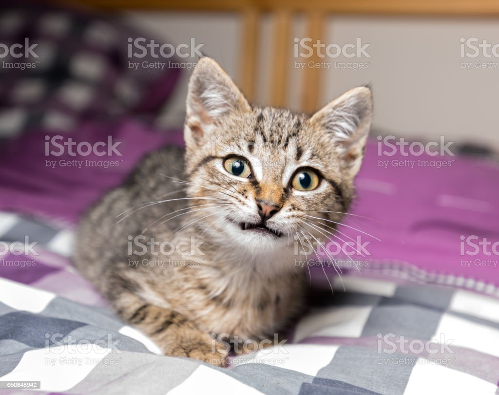 Smilling kitten stock photo