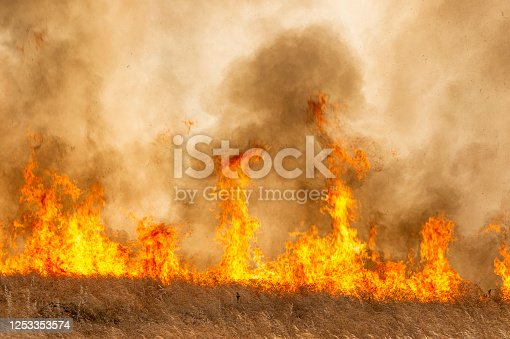 Smoke and flames from dry grass wildfire burning near rural farm.  Taken in the San Joaquin Valley, California, USA