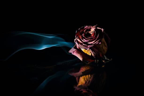 Smoke for dry rose on black picture id1036899902?b=1&k=6&m=1036899902&s=612x612&w=0&h=bzrnwofmtbujrpgfmwlzcqqkgsd1qycb7d55gl1 o2m=