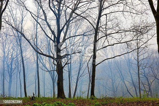 This area is home to a planned burn. The smoke is receding, but the fire has done a lot to help restore this Oak Savanna