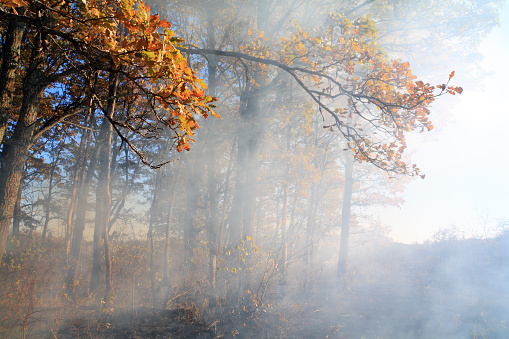 Smoke in the forest burns dry grass and trees the fire harms nature