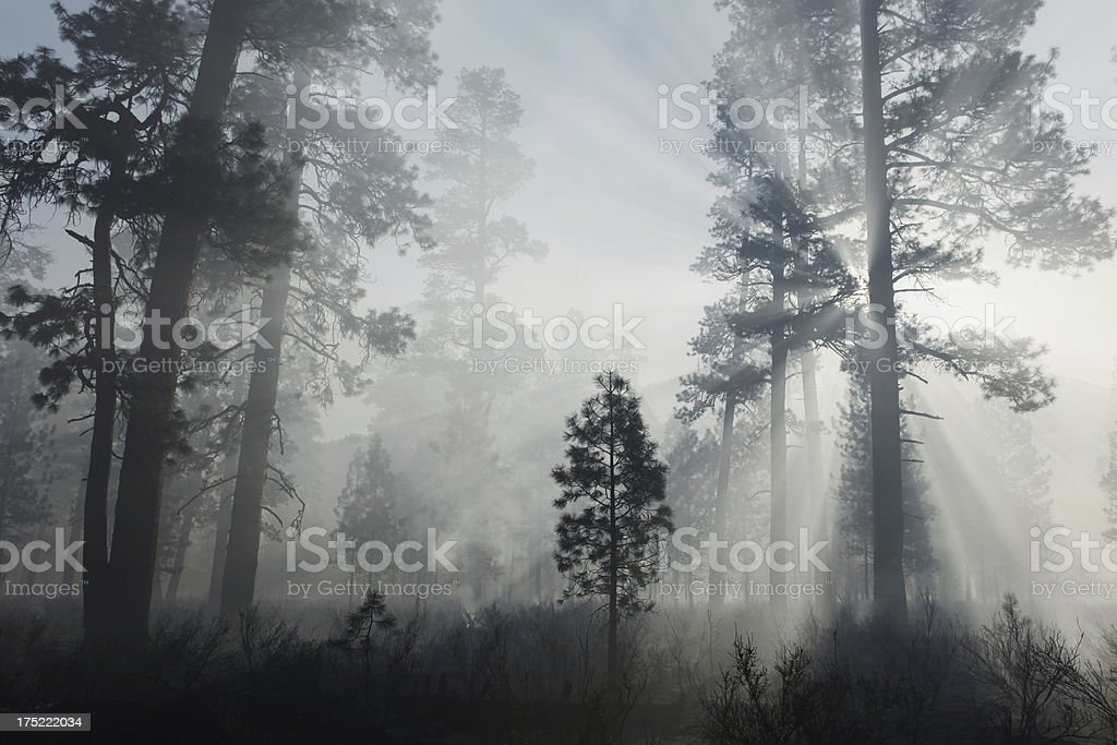 Smoke in the forest stock photo