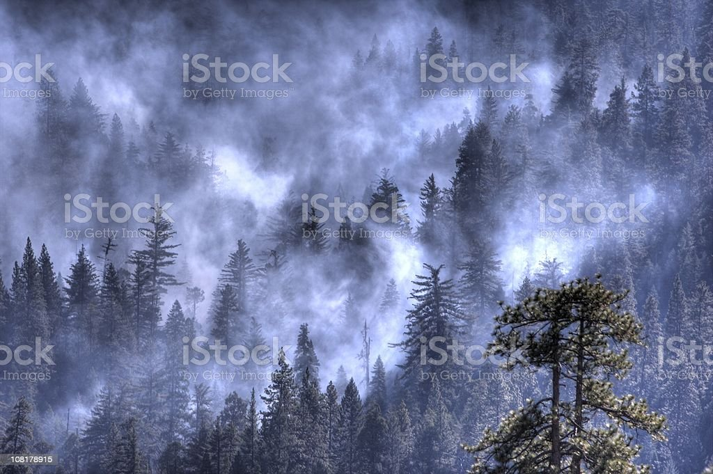 Smoke over a forest stock photo