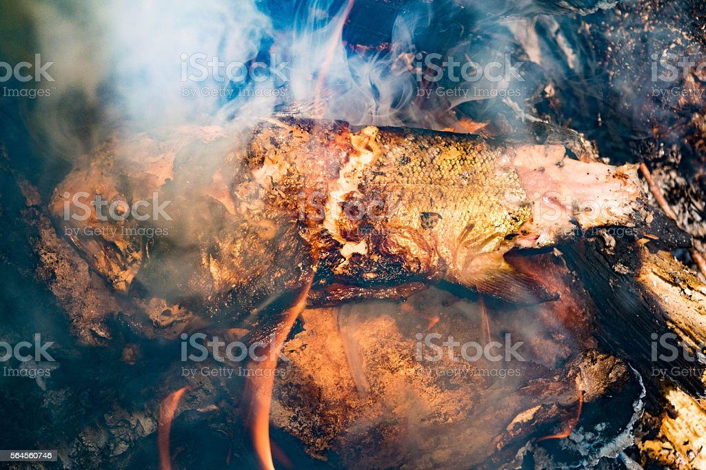 smoked fish on the campfire royalty-free stock photo