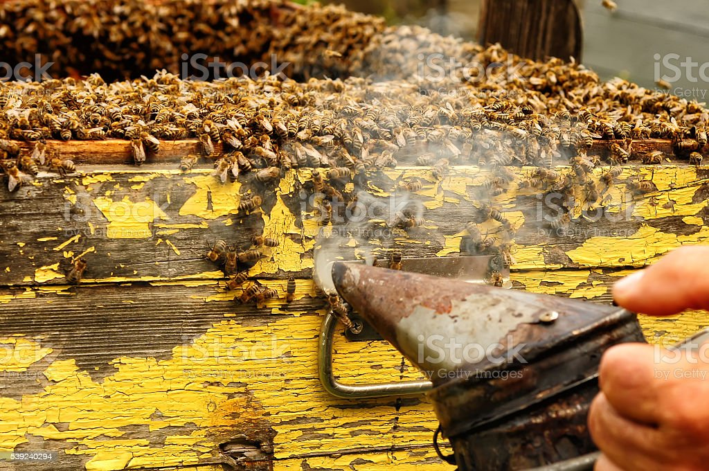 Smoker beekeepers tool to keep bees away from hive royalty-free stock photo