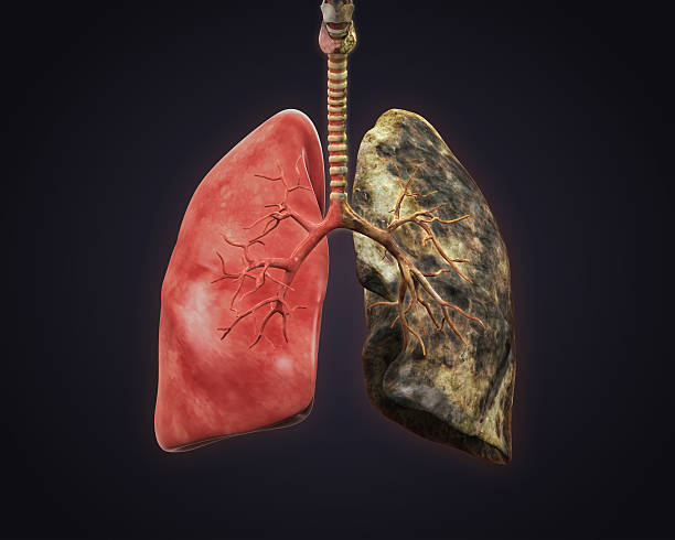 Smokers and Healthy Lung Smokers and Healthy Lung Illustration. 3D render lung stock pictures, royalty-free photos & images