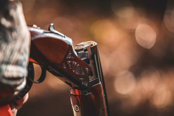 Smoking Gun On the hunt... bird hunting stock pictures, royalty-free photos & images