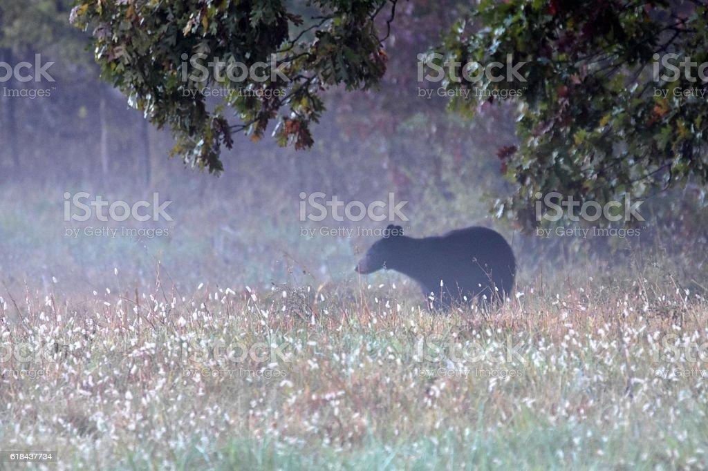 Smoky Mountain Bear stock photo