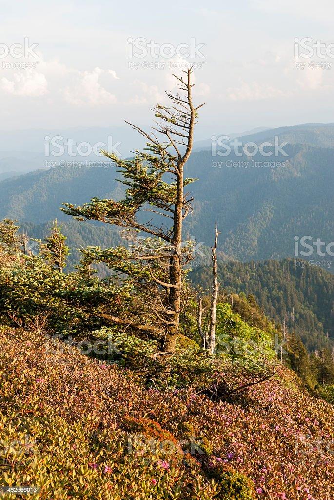 Smoky Mountain landscape stock photo