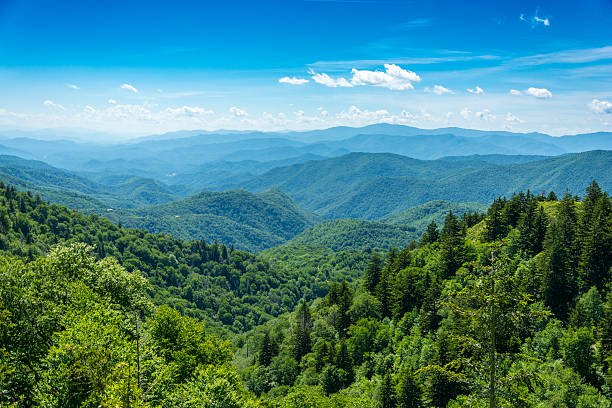 Smoky Mountain Valley View A view over the tops of trees to the Smoky Mountain range in Tennessee, USA. appalachia stock pictures, royalty-free photos & images