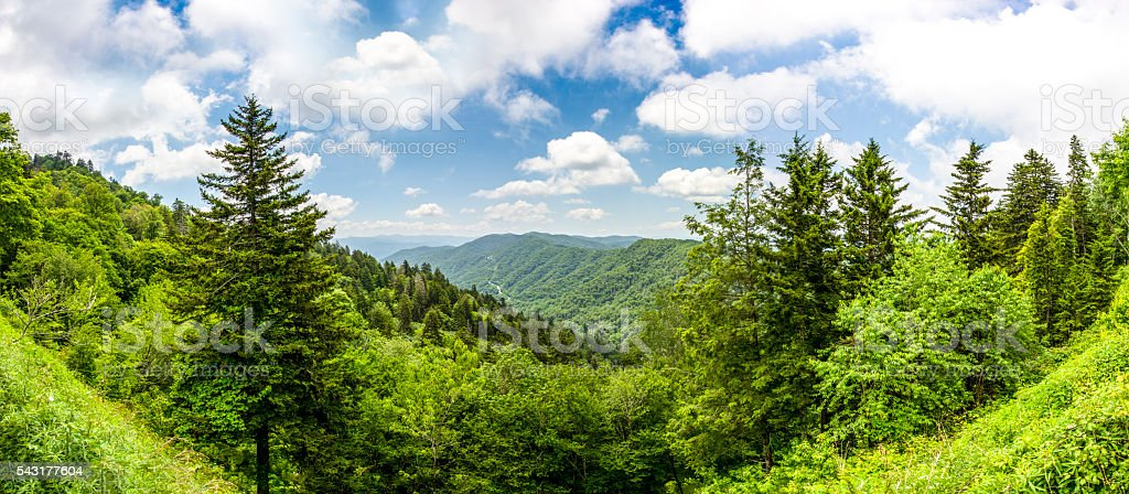 Smoky Mountain Woodland Panorama stock photo