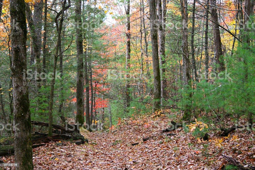 Smoky Mountains in fall season royalty-free stock photo