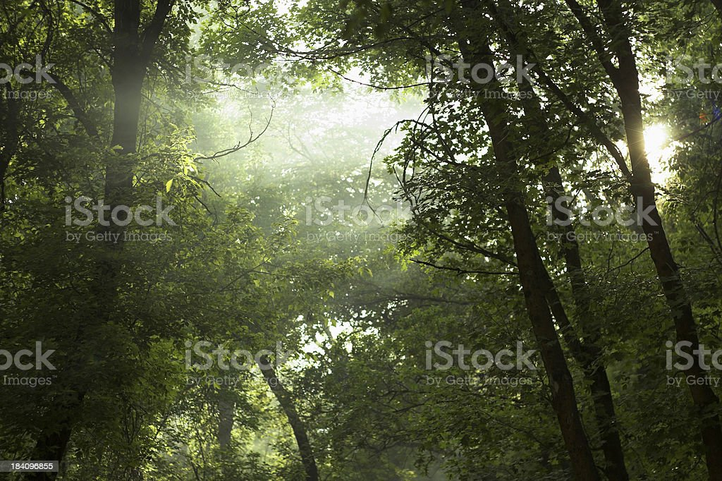 Smoky Sky royalty-free stock photo