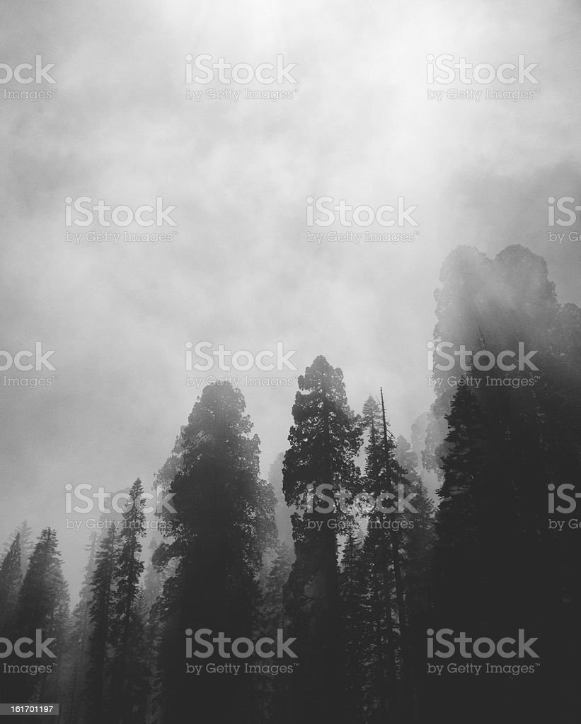 Smoky Trees stock photo