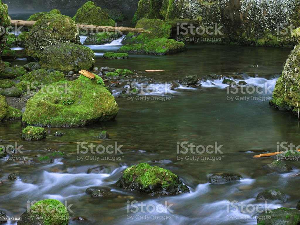 Smooth Water with Mossy Rocks and Fallen Trees royalty-free stock photo