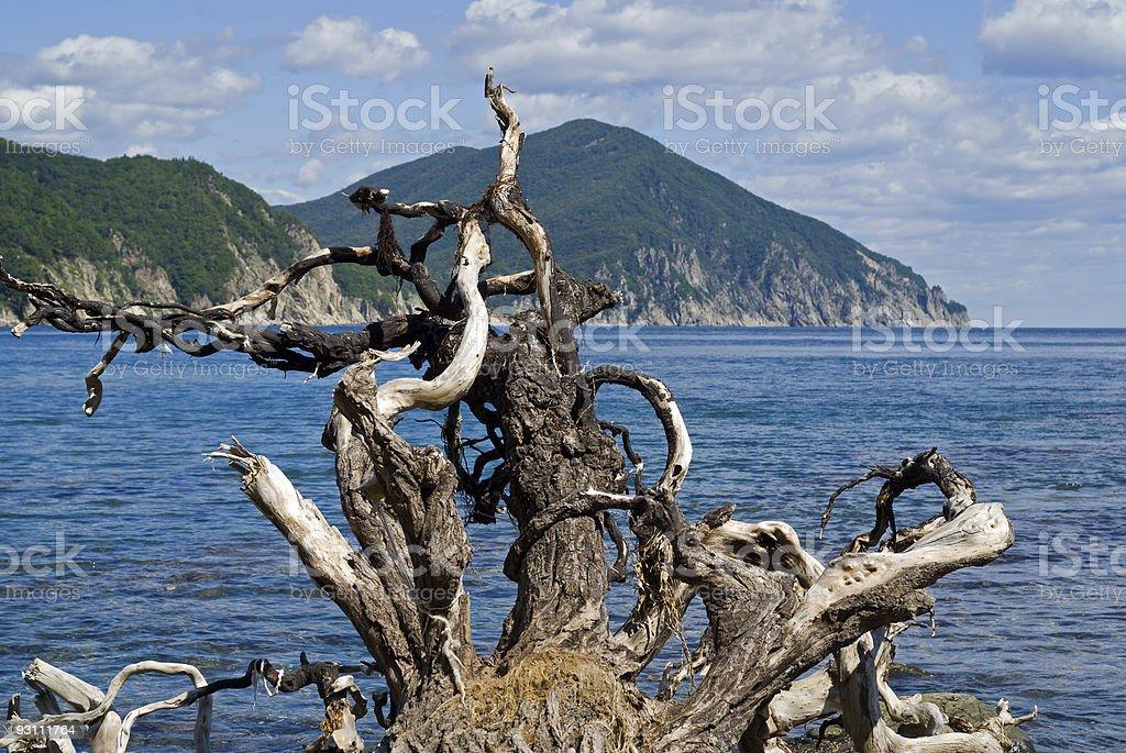 Snag and sea - Royalty-free Ağaç Stok görsel