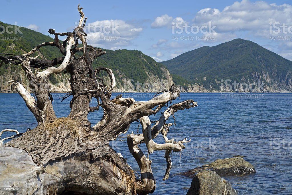 Snag and sea royalty-free stock photo