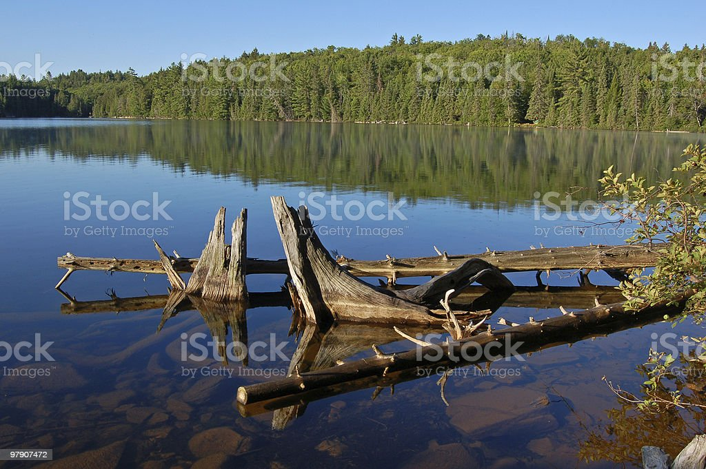Snags in blue lake royalty-free stock photo