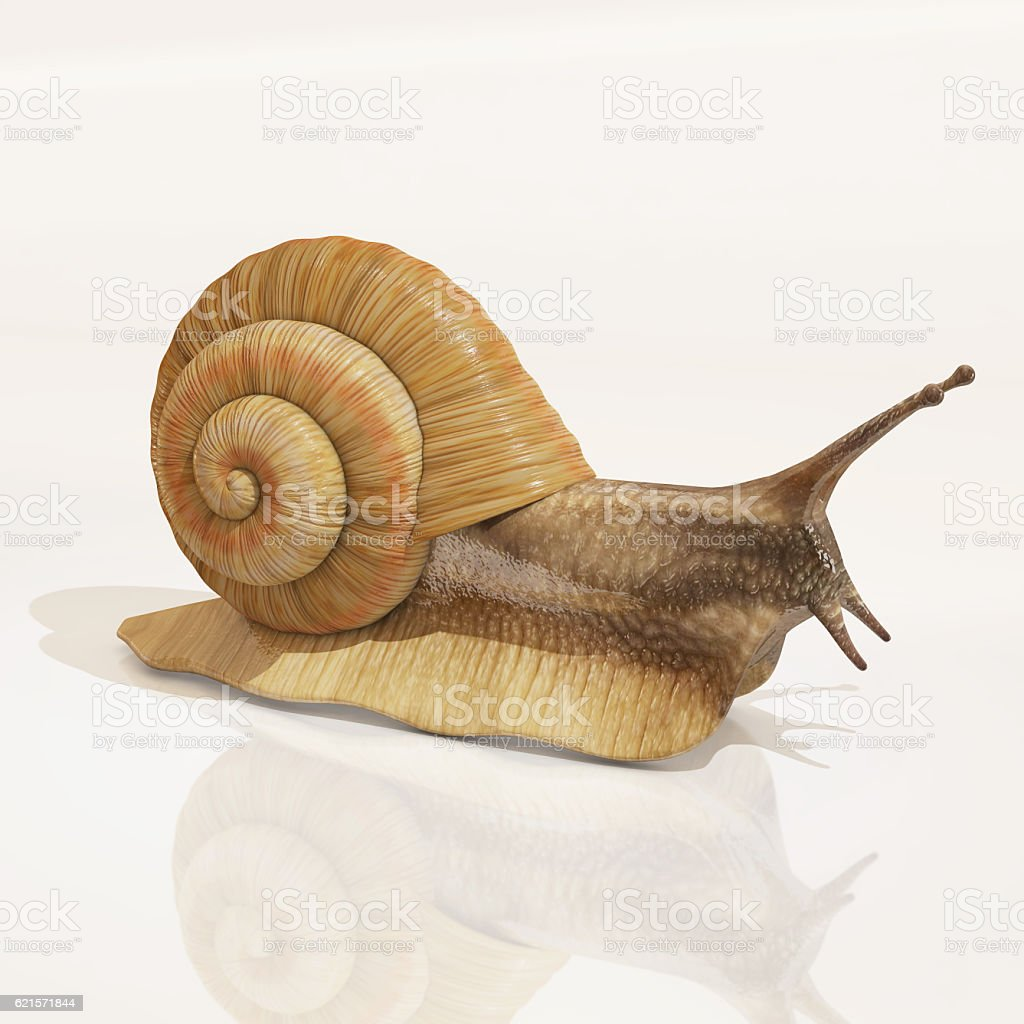 snail, 3d rendering photo libre de droits