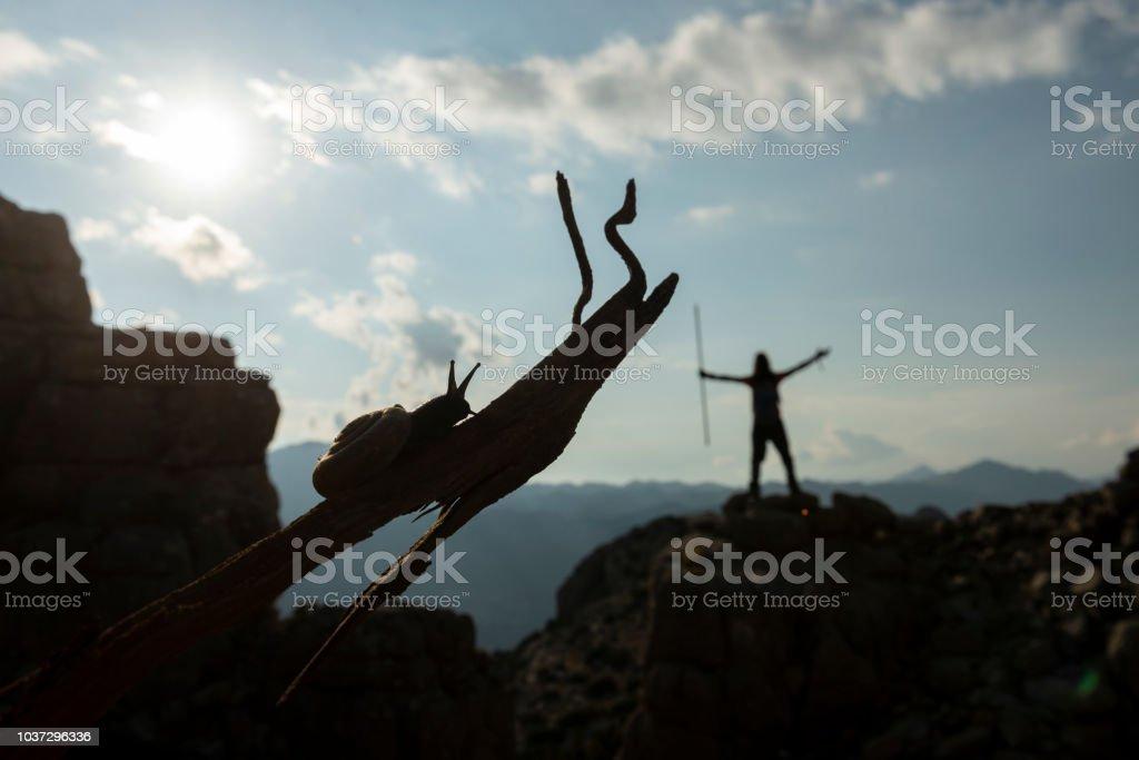 snail and climber climb and success stock photo
