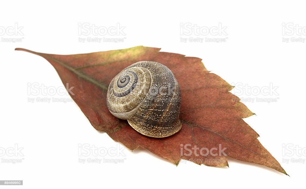 Snail  and leaf royalty-free stock photo