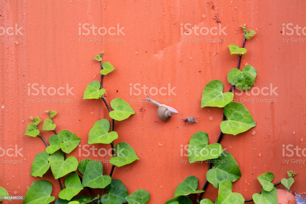 snail and plant on the wall stock photo