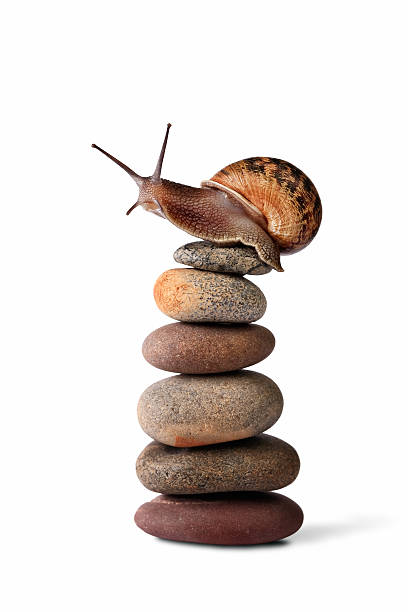 Snail climbing to the top of a pebble stack stock photo