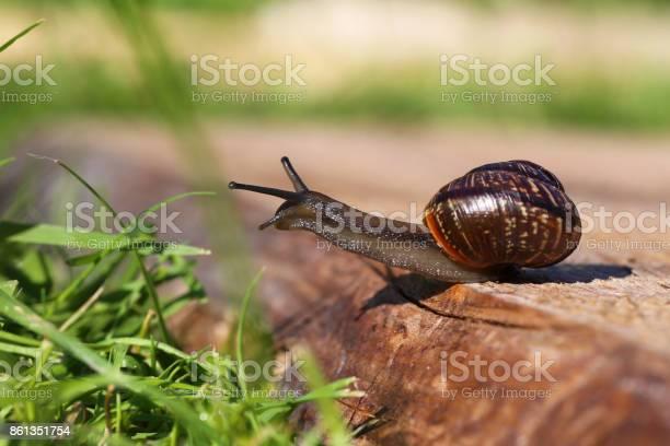 Snail closeup picture id861351754?b=1&k=6&m=861351754&s=612x612&h=cbf9lbgehj8 b 3admzr4f73mwqeohtpxr5hydacagg=