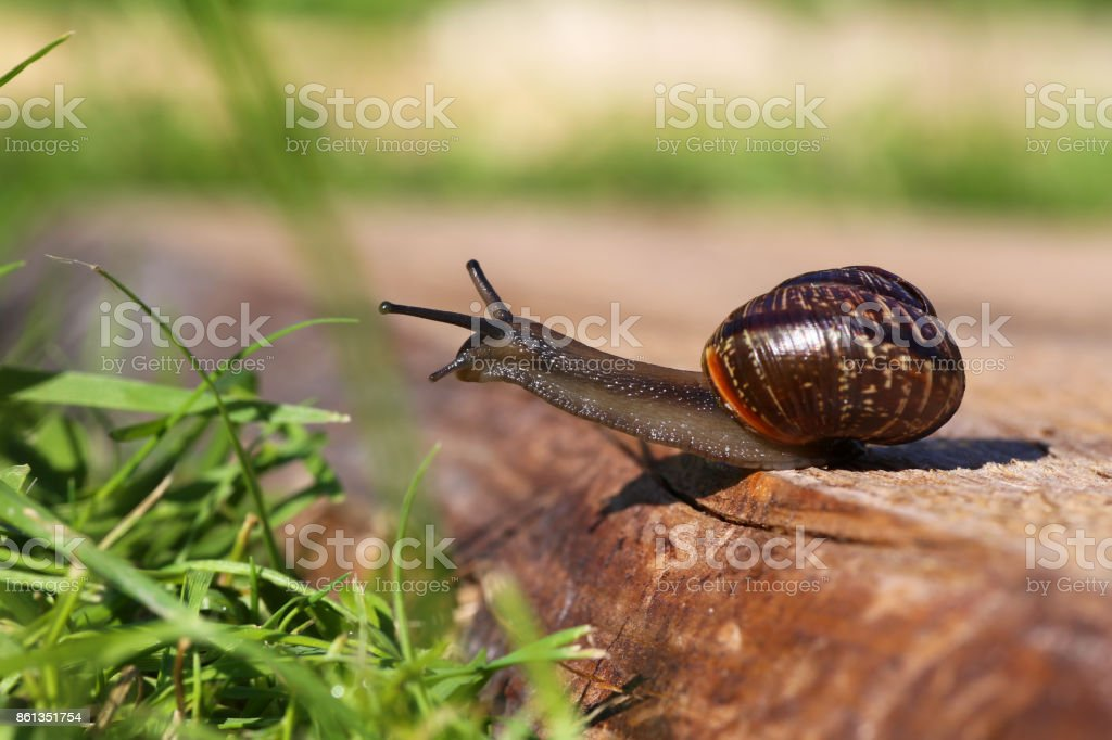 snail closeup stock photo